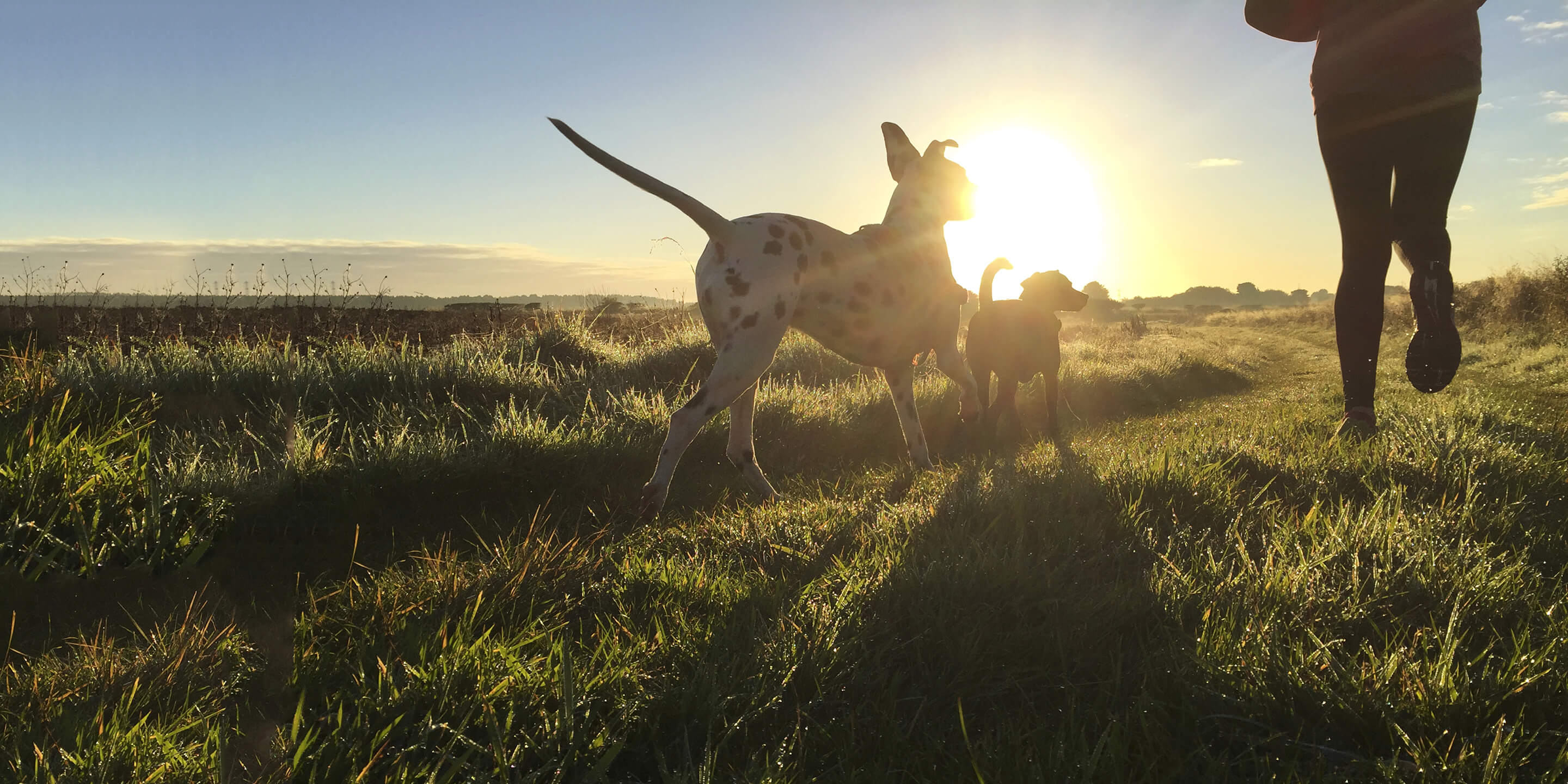 Travelling with pets | Caledonian Sleeper